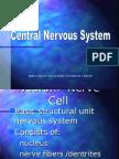 central-nervous-system.ppt