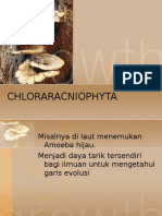 Chlorarachniophyta