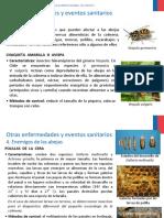 4-insectos