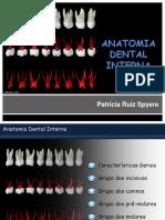 Anatomia Dental Interna - Endo