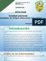 Parasitos en Peces Amazonicos-peru 2016