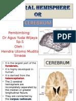 15 Cerebrum