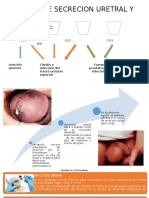 Examen de Secrecion Uretral y Vaginal