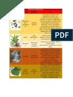 Plantas Medicinales Practica