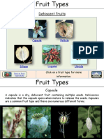 Fruit Types de His Cent