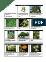 Plantas Para Plantio_região Sul
