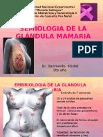 glandula mamaria