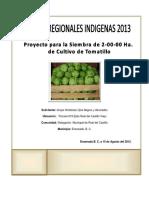 Proyecto Para Produccion de Tomate de Cascara