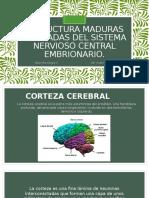 Estructura Maduras Derivadas Del Sistema Nervioso Central Embrionario