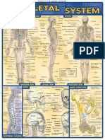 Skeletal System Reference Guide - (Malestrom).pdf