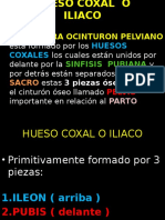 COXAL (2)