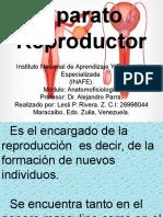 Sistema Reproductor Presentacion