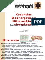 Organelas bioenergeticas