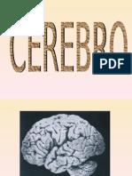O processo cerebral e a publicidade e propaganda