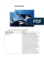 Report Text About Whales