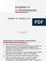 DNA Organization in Eukaryotic Chromosomes