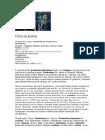 Dendrobium fimbriatum.doc