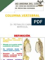 2. Columna Vertebral