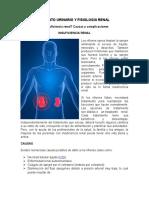 Aparato Urinario y Fisiologia Renal