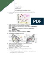 Cuestionario de Electrocardiografía Básica