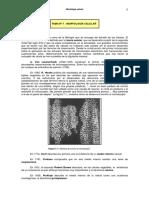 morfologiacelular