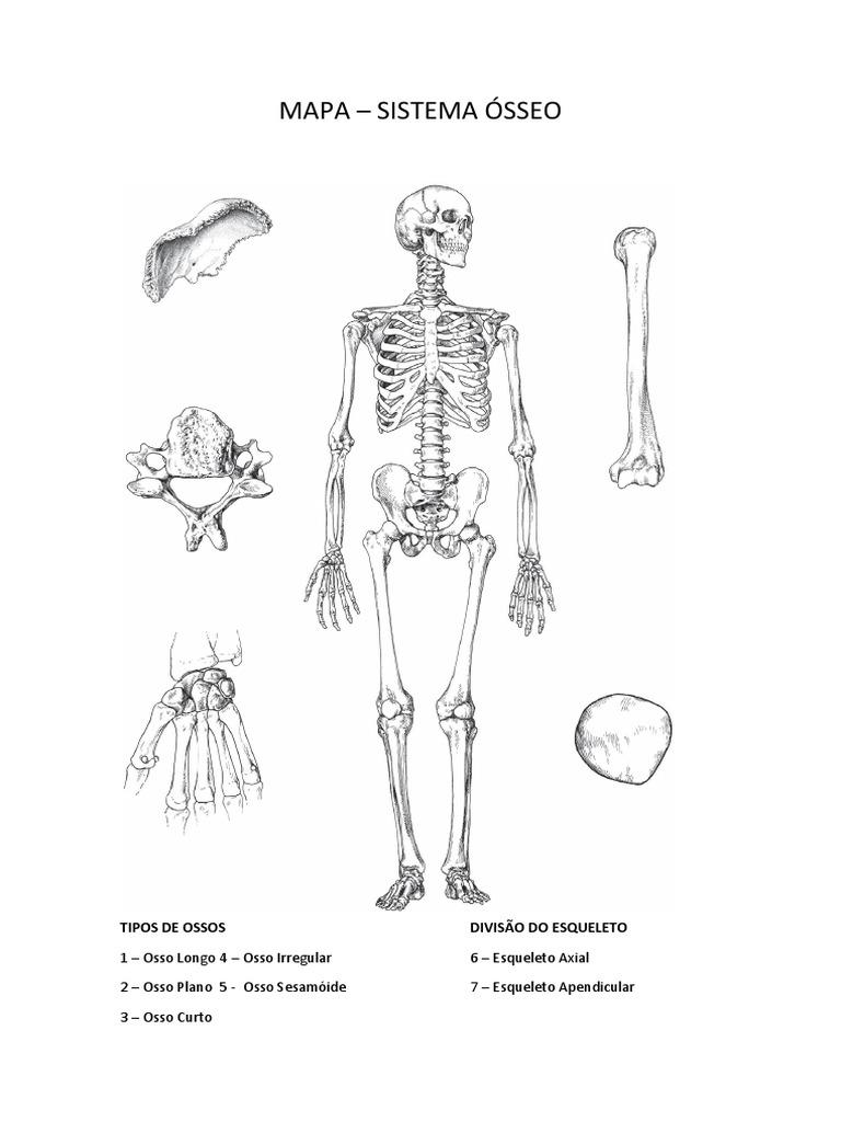 Magnífico Apendicular Anatomía Definición Regalo - Anatomía de Las ...