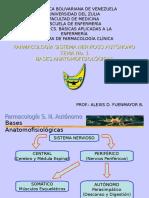 Bases Anatomofisiológicas