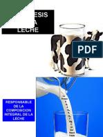 2016Nueva Biosintesis de La Leche