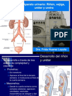 Clase v-1b - Histologia de Riñon y Vias Urinarias