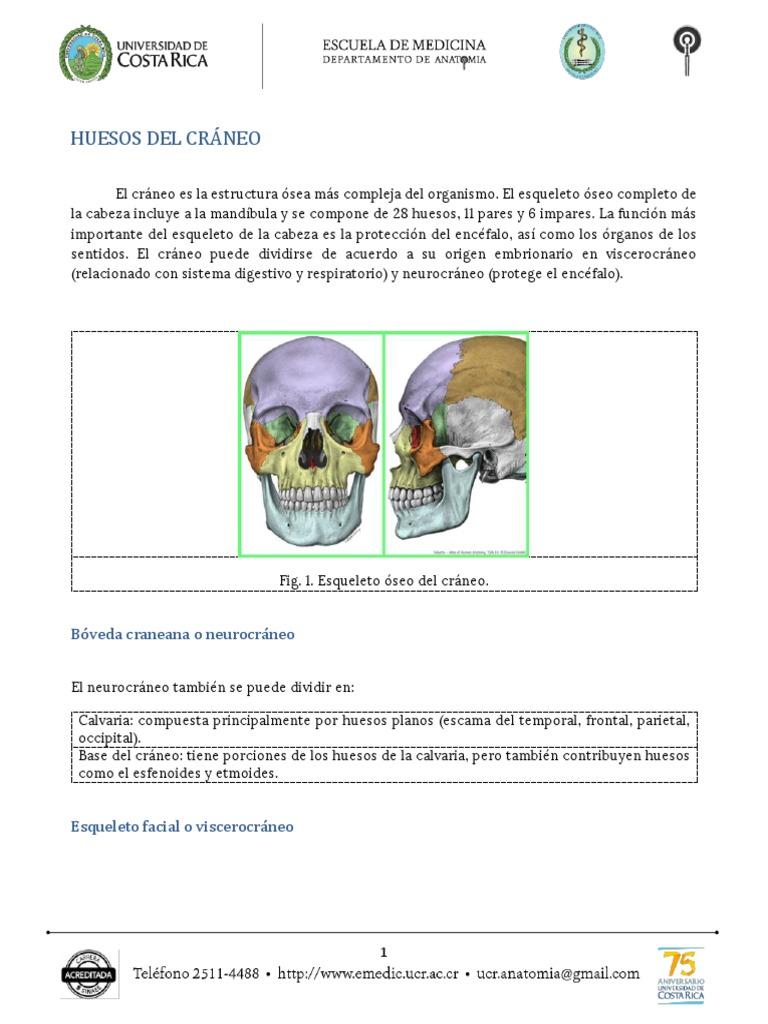 Lujo Cráneo Anatomía Cirugía De La Base Modelo - Anatomía de Las ...