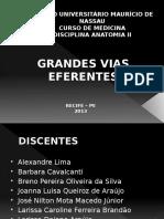 189739540-Vias-Eferentes-Gerais.pptx