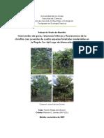 Respuestas fotosintéticas y de producción de Gerbera jamesonii H. Bolus, a distintas dosis de fertilización nitrogenada