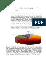 Informe de Evaluacion de Enfermedades Del Esparrago 2016