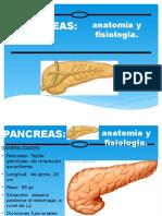14° Pancreas-1