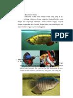Pengertian Ikan Secara Umum