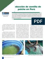 Nro 41 Produccion semilla de Paiche.pdf