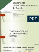 SNC-SNP-LESIONES DE NEURONAS Y SU RESPUESTA.pptx