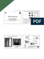 Biotecnologia_plantas_transgenica