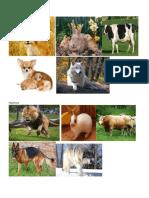 Animales Ovovivíparos