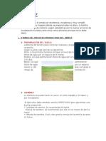 EL ARROZ FINAL.docx