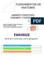 faringe-anatomia