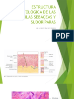 Fisiologia de La Secrecion Sudoral Ecrina y Sebascea e Histolgoia de Glandulas