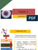 Chapter 3 Eukaryote