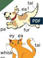English Body Animals