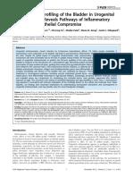 Transcriptional Profiling of Bladder