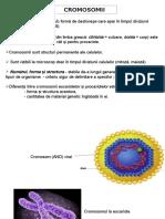 GENETICA GEN curs II cromosomul la procariotele acelulare.ppt