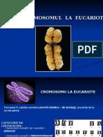 Genetica generala, curs III si IV (1).ppt