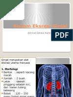 Sistem Eksresi Ginjal(Fister 3)