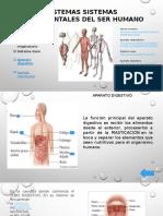 Presentación sistemas corporales