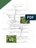 Plantas Criptógamas